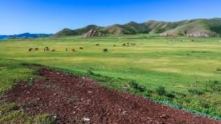 【国土の8割が草原の国】モンゴルってどんなところ?