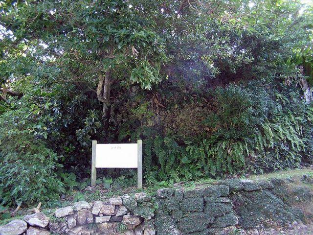ひとり旅の参考にも!竹富島に行ったら絶対に訪れたいスポット7つ