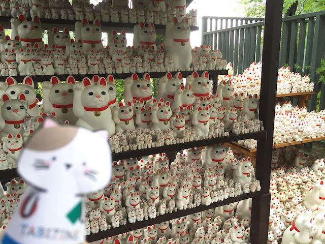 指ネコ「またたび」ソロ活連載【6】まねき猫であふれかえったお寺で癒される