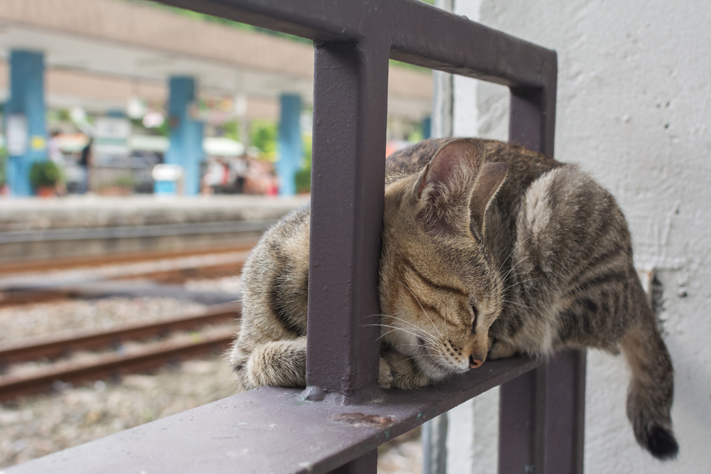 ネコ好きにはたまらない、世界の美しい町5選