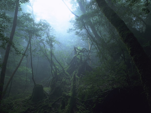 宮崎アニメの乗り物で、空想旅行に出かけませんか?