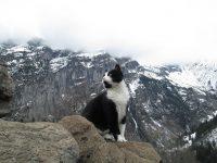 山の神の使者?スイスの村で道に迷った男性を導いた猫