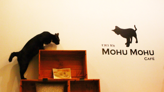 【タイ】かわいさに悶絶♡地元で大人気の猫カフェ