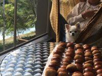 愛犬と安らげるラグジュアリー空間。「レジーナリゾート軽井沢御影用水」