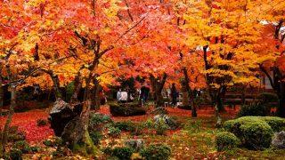 【京都】知る人ぞ知る京都の美しい紅葉スポット「京都洛北・圓光寺」