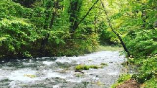 自然豊かな軽井沢でリラックス。レジーナリゾートを愛犬と楽しむ