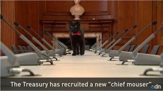 職場はイギリス大蔵省!赤いリボンの黒猫グラッドストーン