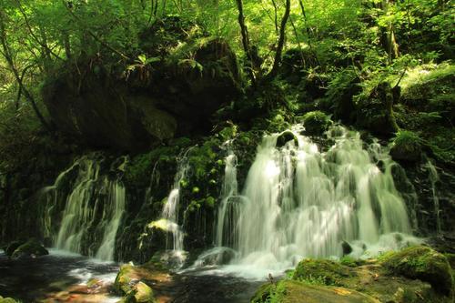 豊かな水、美しい自然。苔むす岩と元滝伏流水を散策