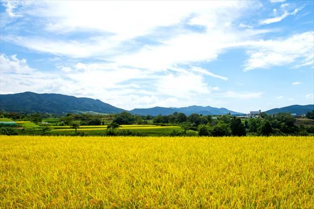 4位は島根!秋の国内旅行で【人気急上昇エリア1位】は昨年比+92.3%のあの県