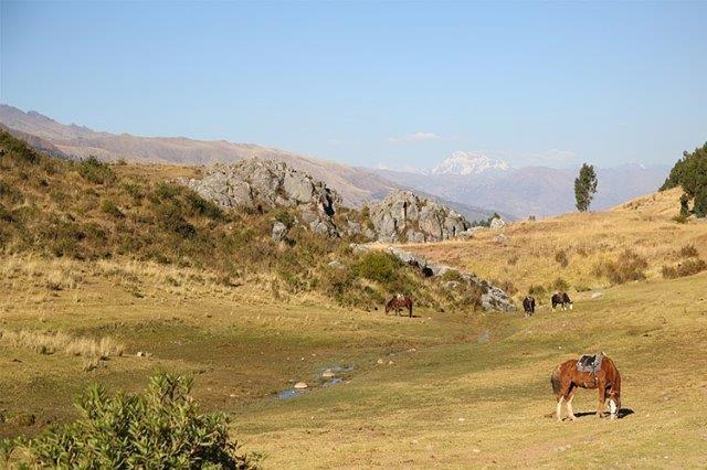 丘の上からクスコの自然と遺跡を満喫。コスパよし!乗馬トレッキング