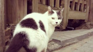【よくきたニャ〜】二重に癒される!カワイイ看板ネコのいる温泉宿3選