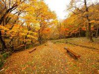 紅葉を堪能!岐阜県「せせらぎ街道」を行くゴールデンルートをご紹介