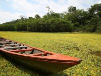 水草の上をたゆたうボートクルージングが最高!ペルーのアマゾン川ツアー