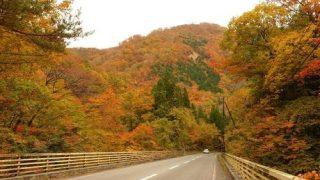 道すがら野生のキツネにも遭遇!秋田県・小安峡に向けて美しき紅葉ドライブ