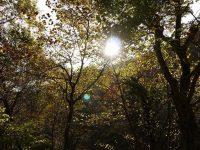 透き通る湧き水と大自然。五感すべてで癒される鳥取県江府町「木谷沢渓流」