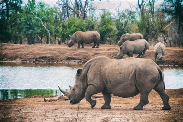 初のアフリカ旅行は決まり!アフリカ大陸で観光に適した安全な国3選