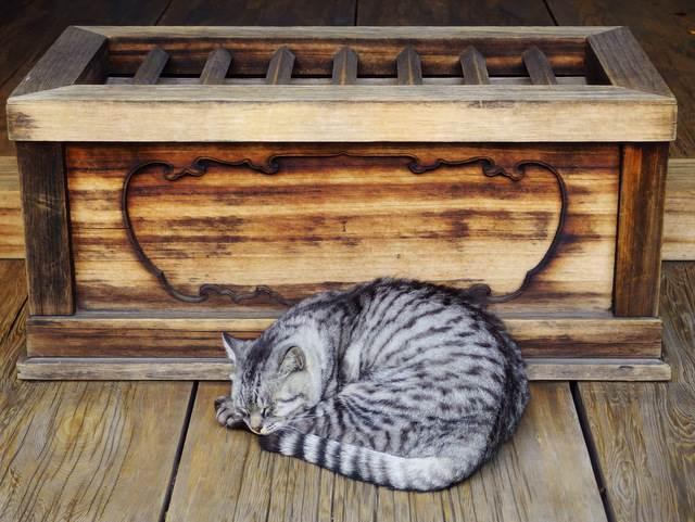【猫神様に逢える!?】猫の住まう町、谷根千周辺を散策!