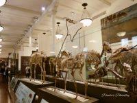 宇宙や恐竜などの幅広い展示!見ごたえのあるNY「アメリカ自然史博物館」