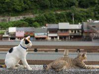 世界6大猫スポット、台湾の猫村「猴硐(ホウトン)」で可愛いを見つける旅