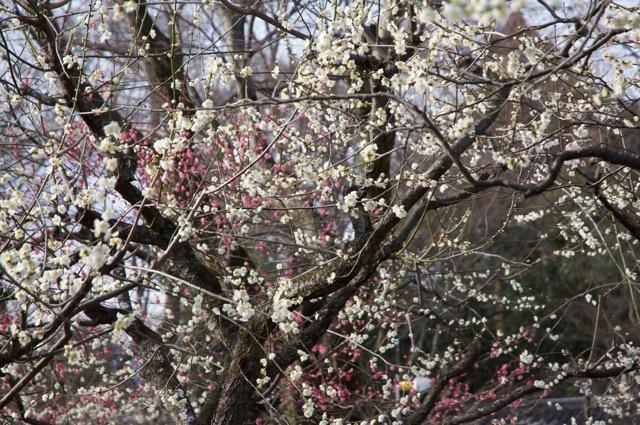 冬の京都は車で情緒のある旅を