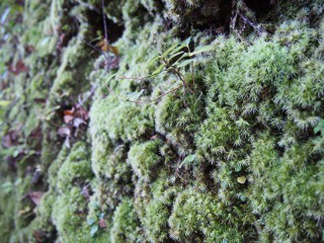 野生の猪にも遭遇。苔の世界を楽しめる宮崎の猪八重渓谷で森林セラピー