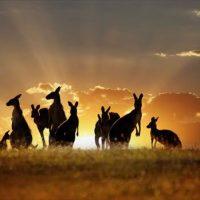 オーストラリアの宿を格安で探せる日本語サイト知ってる?