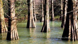 水の中に生える木々。SNSで話題の九大の森でジブリのような世界に出会う