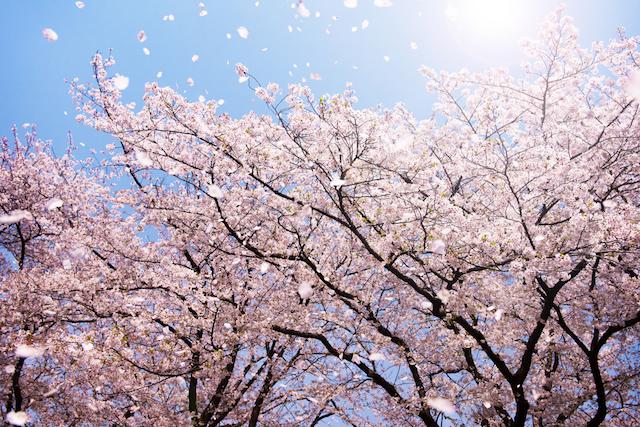 お花見で盛り上がりそう、フォトジェニックなおつまみアイデア3選