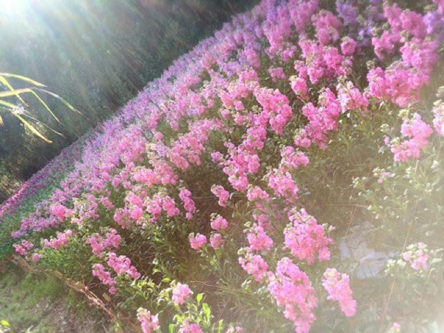 館山城の梅園と天守閣から見る景色が素晴らしい。春を感じる千葉の小旅行
