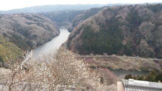 どの梅も本当にキレイ・・・月ヶ瀬梅林で梅を見ながらハイキング!/現地特派員レポート