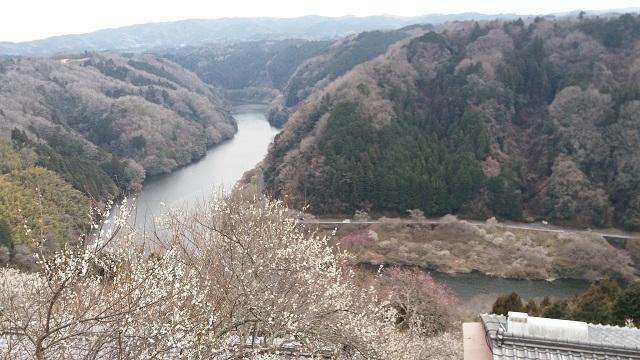 梅の名所「月ヶ瀬梅林」でハイキング!/現地特派員レポート