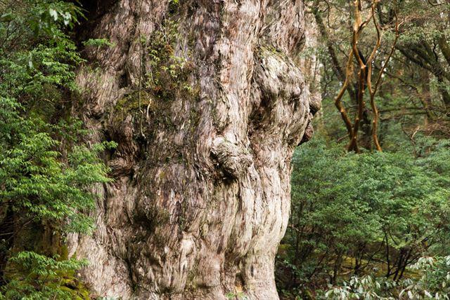 【世界遺産を厳選】日本国内!疲れた心身のリセットにオススメの自然遺産