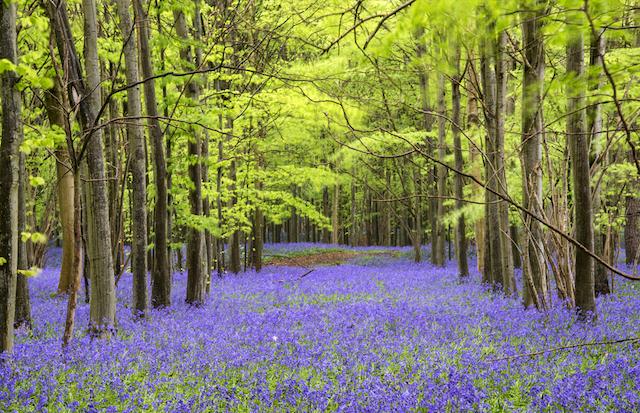 青の優しさに包まれたい 気持ちを落ち着かせるブルーの花