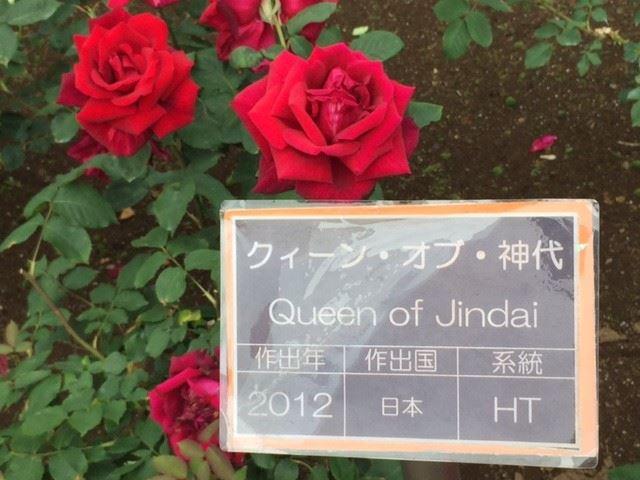 やっぱり薔薇が好き。 美しくて楽しい初夏の神代植物公園を訪ねてみた!