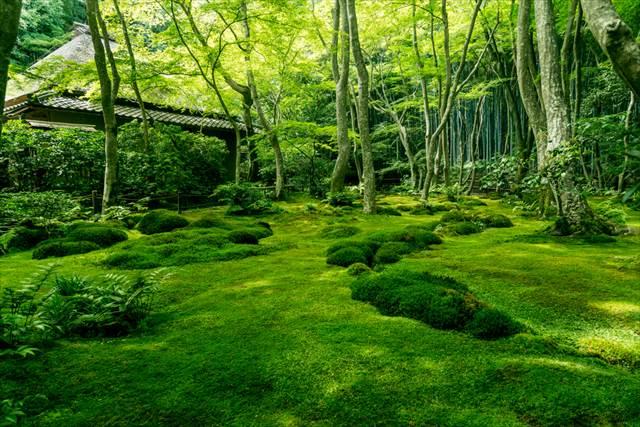 梅雨明け前に掲載希望 梅雨だから美しい。日本の雨絶景7選