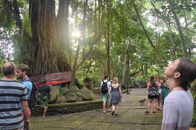 バリ島に来たら都会のオアシスモンキーフォレストで癒されよう!