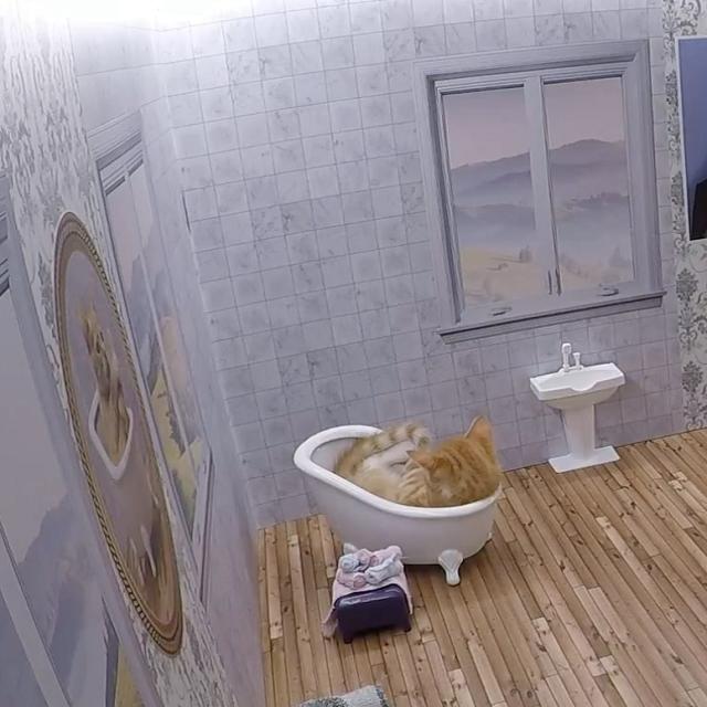 ニャンとも可愛い、猫の共同生活リアリティ番組!そして意外な目的が。