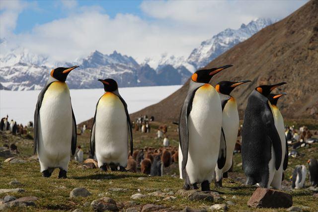 南半球でオーロラを見よう!「南極の光」サウザン・ライトの観測点ベスト5。