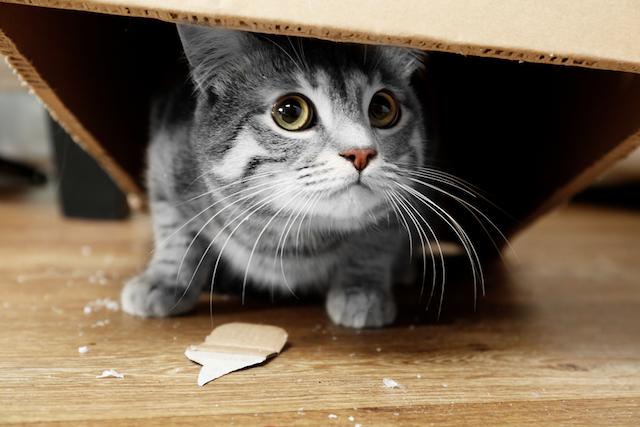 猫好きハートをギュッとつかむ!ネコ型容器の「福ねこ弁当」