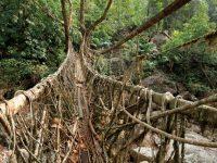"""自然と人の行為の融合、インドの山奥にある神秘の〝生きた橋""""とは"""