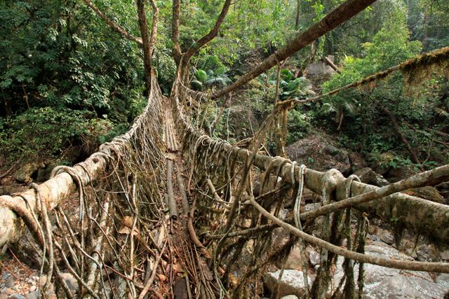 自然と人の行為の融合、インドの山奥にある神秘の〝生きた橋