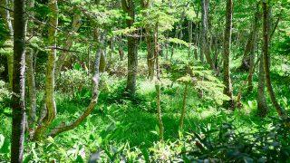 森林率が先進国で【世界3位】日本の森は世界的に見ても豊かだと知ってた?【日本の不思議】