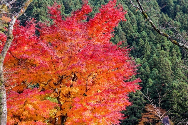 思いついた時に行ける、東京都内の紅葉スポット8選