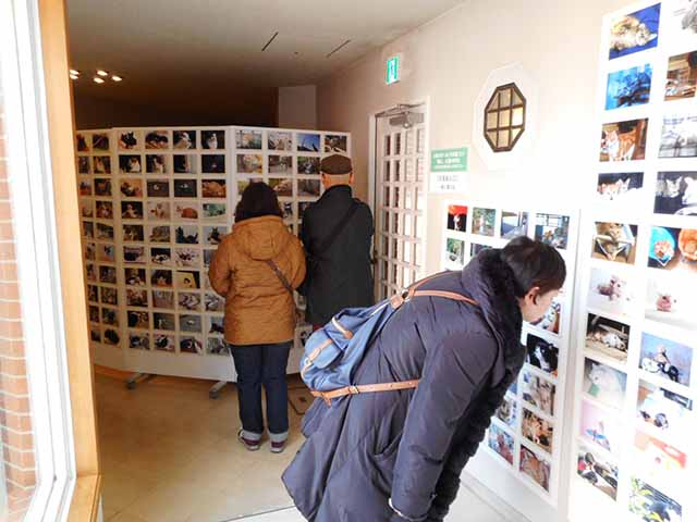 自慢の猫写真を応募しませんか?「大佛次郎×ねこ写真展2018」に向けて猫写真を募集中!