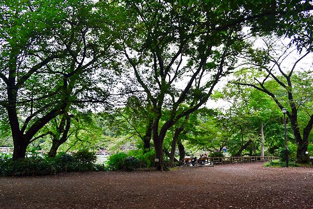 秋になったら井の頭公園でランチ!テイクアウトできる可愛すぎる「ハワイアンおむすび」