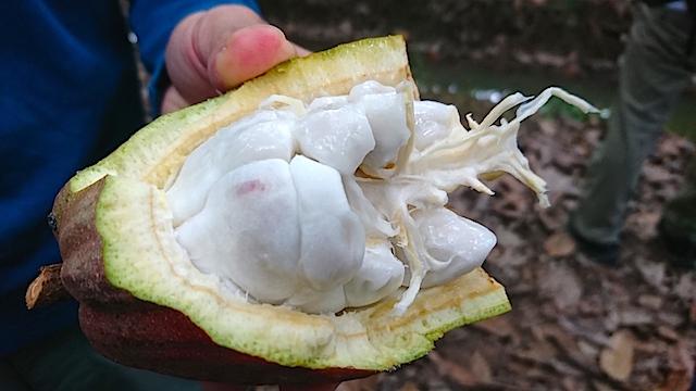 カカオの果実はライチのような味!? ビーントゥーバー専門店「マジドゥショコラ」の甘美なる新作をご紹介