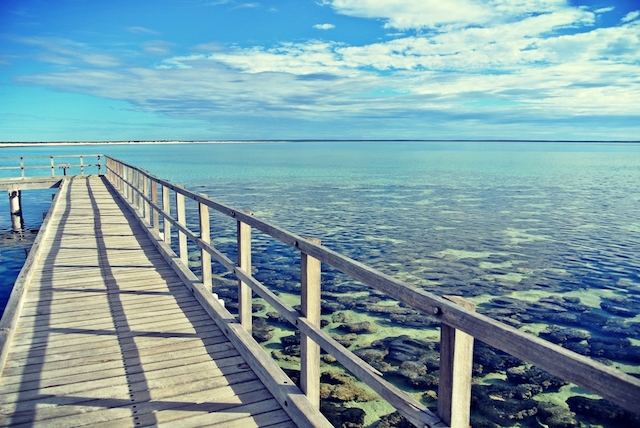 【オーストラリア】全長なんと60km以上!貝がらでできた世界遺産シェル・ビーチ