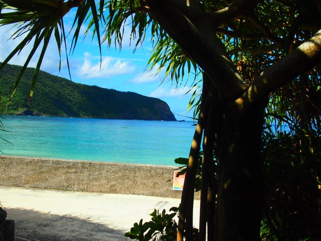 1泊2日でも大満足!しまバスを使って海沿いを巡る、奄美大島のあたたかい旅