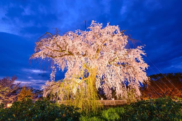 春風にさそわれ、桜咲く京の都へ 厳選!京都の桜名所11選