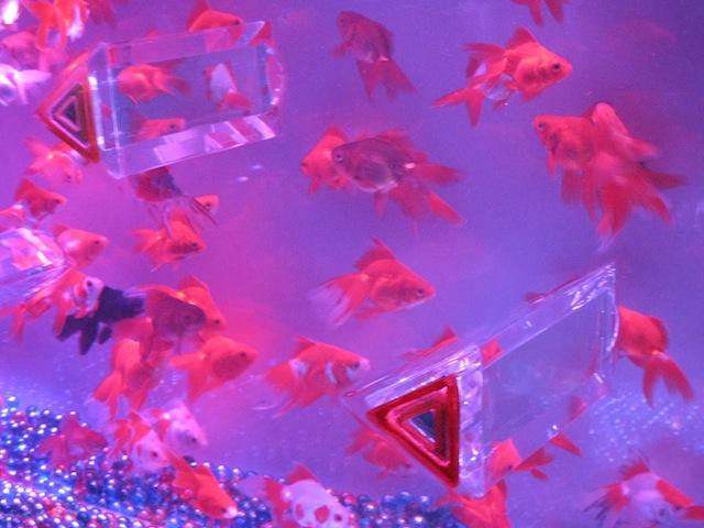 金魚と一緒に幻想的な水中アートの旅へ!アートアクアリウムがすごい